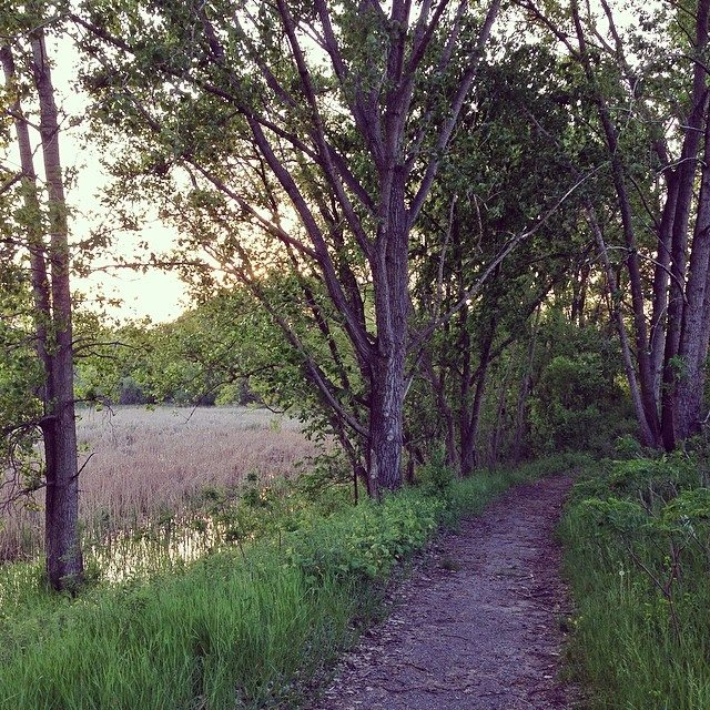 Big Willow Park