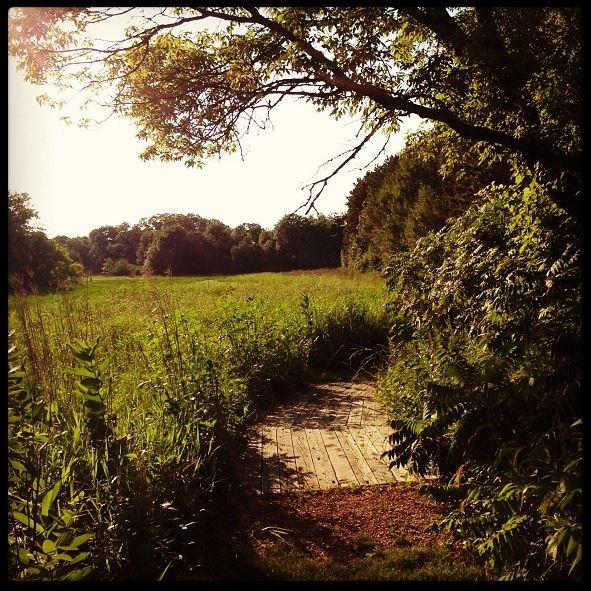 Spring Peeper Meadow 3