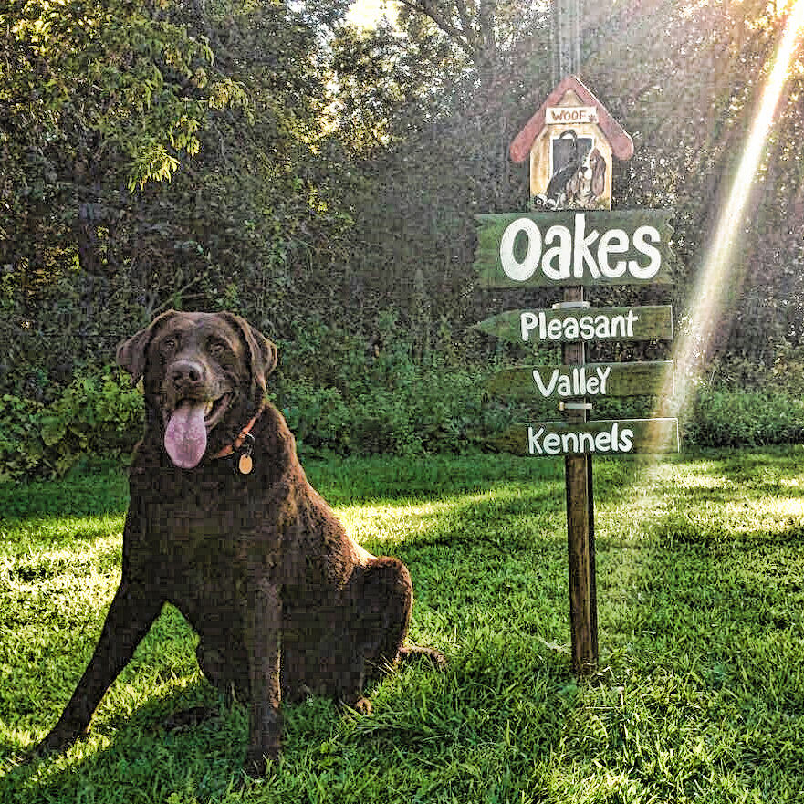 Oakes Kennels header photo