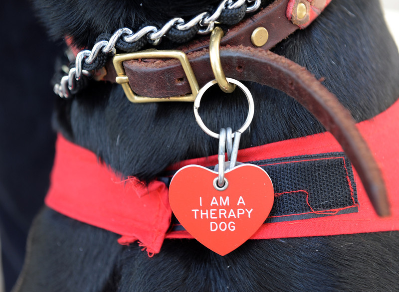 0415_NWS_TDB-L-Dogs.LAX012.jpg
