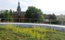 Star Tribune explores Green Roofs