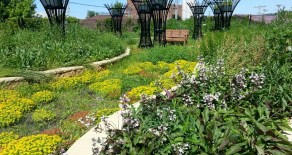 Opportunity to Serve on the Minnesota Green Roofs Council Board
