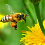 Research shows green roofs help bees get around
