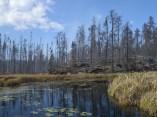 pagami burned area