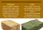 Difference Between Straw And Hay