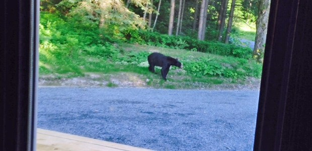 Bear attacks Parry Sound area home 3 times, shot by owner