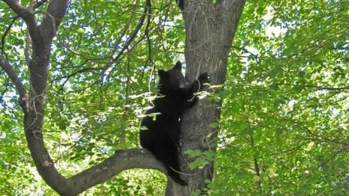 bear-cubs-2