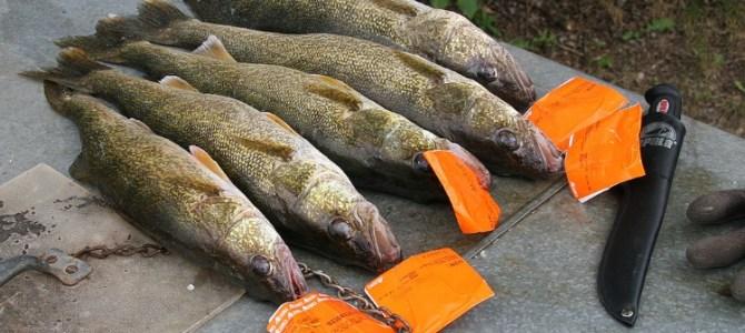 Fishermen fined $14,900