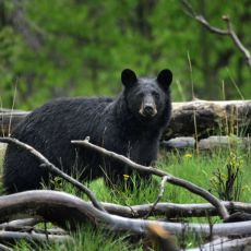 Remote bear hunt outfitter irked by internet requirement