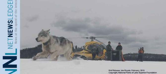 Canadian Wolves Released at Isle Royale