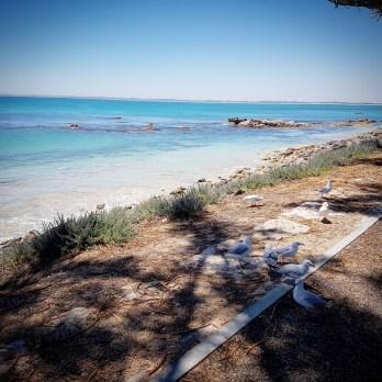 Robe Beach (1)