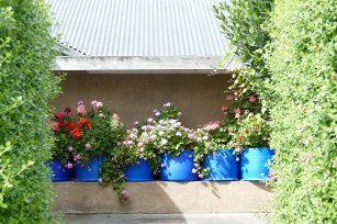 Bev Macauley and Peter's garden