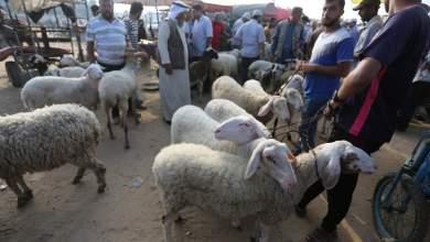 Photo of الزراعة تكشف تفاصيل تجهيزاتها لموسم الأضاحي في غزة