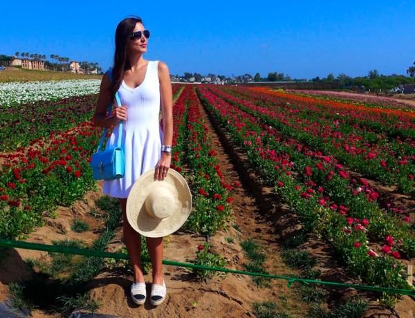 143_Flower fields