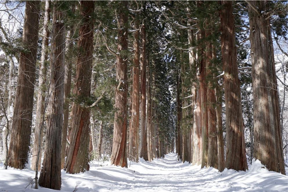 冬の戸隠神社に行ってきました!その2