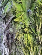 MoArt Tree Magic 74