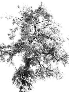 MoArt Tree Magic 103