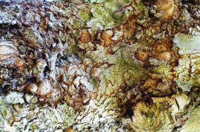 MoArt Tree Magic 125