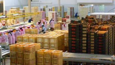 المغرب يحتل المرتبة الأولى في تصدير الخضر والفواكه إلى إسبانيا 4
