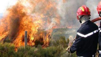 النيران تلتهم هكتارين من الغطاء الغابوي بتطوان 6
