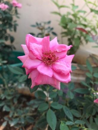 Beautiful_pleasing_flower_nature