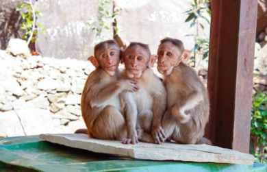 Monkey-Best dudes