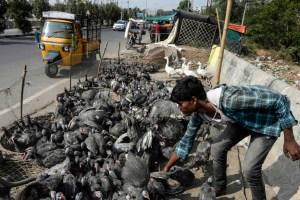 Marchés alimentaires   L'OMS demande la suspension de la vente de mammifères sauvages vivants