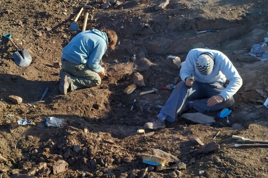 Les restes d'un nouveau petit dinosaure carnivore ailé découverts en Argentine