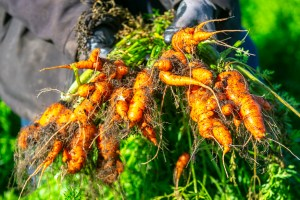 Gaspillage alimentaire  | Il faut qu'on parle des légumes moches