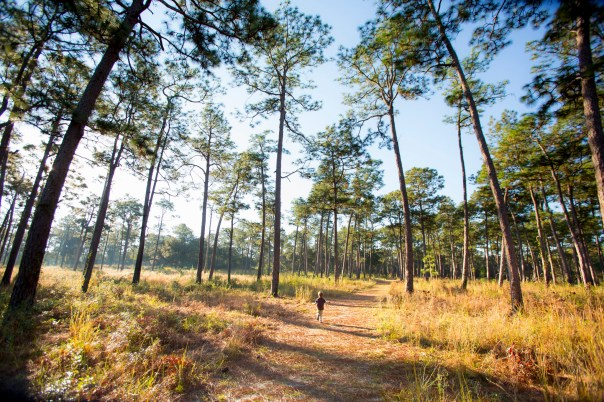 A young boy runs beneath the tall pines at the Longleaf Pine Forest in Mobile, Alabama.
