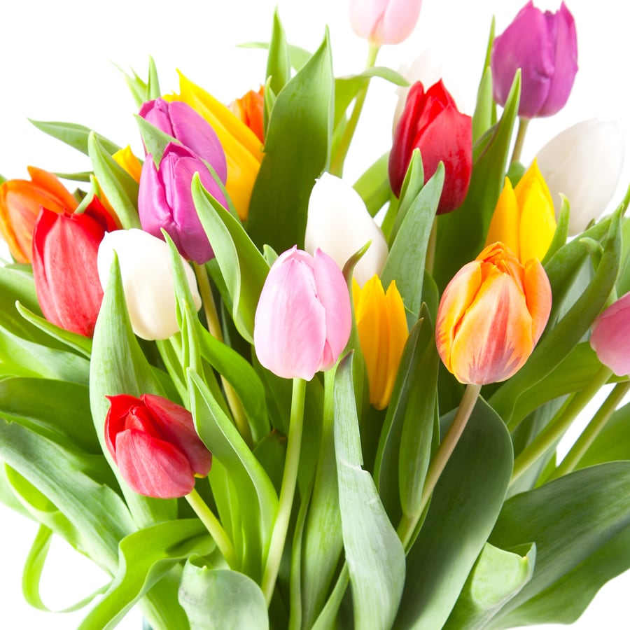 Shop 50 Count Tulips Mixed Bulbs At