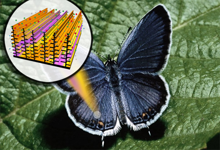 digital-butterfly Darpa's Butterfly: Inspired sensors light up at chemical threats
