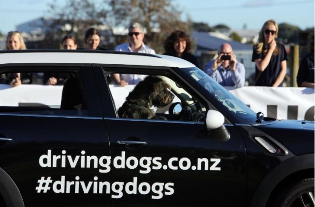 spcadrivingdogs-1-640x422 NZ SPCA Raises Awareness For Shelter Dogs With Porter, The Driving Dog
