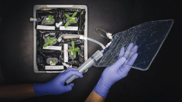 planting-space NASA Planning to Grow Lettuce in Space, Starting This Year