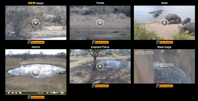 africam Africam: Go On An African Safari From The Comfort Of Your Couch