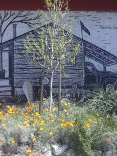 These are beautifully painted or drawn on side of downtown library