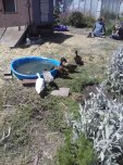 Homeless Garden Project, Santa Cruz, Ca May 2014