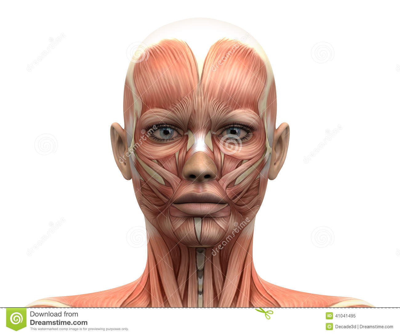 Facial Palsy Amp Physiotherapy Treatmemt Mobile Physiotherapy Clinic Ahmedabad Gujarat