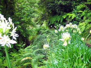 Levada do Rei. Photo of white flowers in the middle of the green forest.