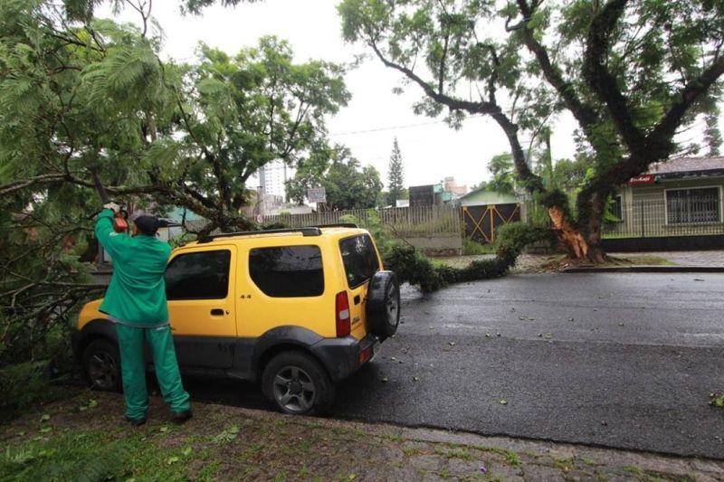 Rua do Herval Árvore