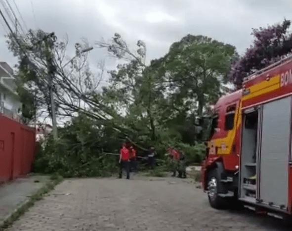 Árvore cai no Altântico Rua Evaldo Schaefer
