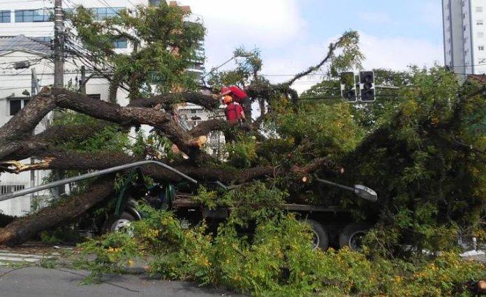 Árvore cai sobre caminhão na Avenida Pompeia