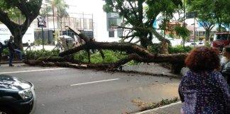 Árvore na Avenida Rebouças