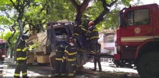 Caminhão Árvore Pompeia