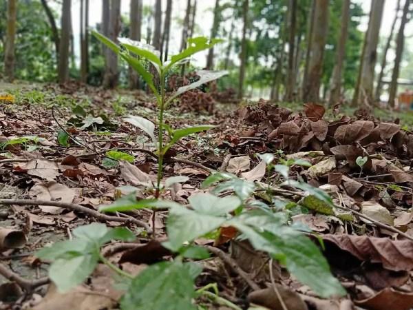 oppo f11 pro 48 mp camera agodi garden plant