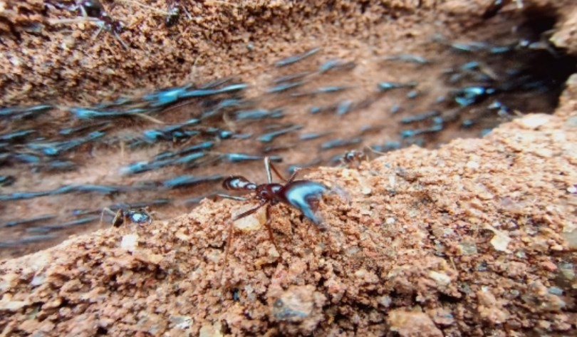 camon 12 close-up of ants