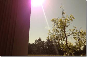 iPhone5purpleflare