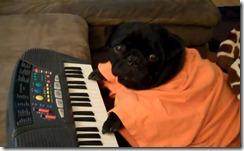 Keyboard-Pug