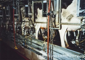 dairy milking machines