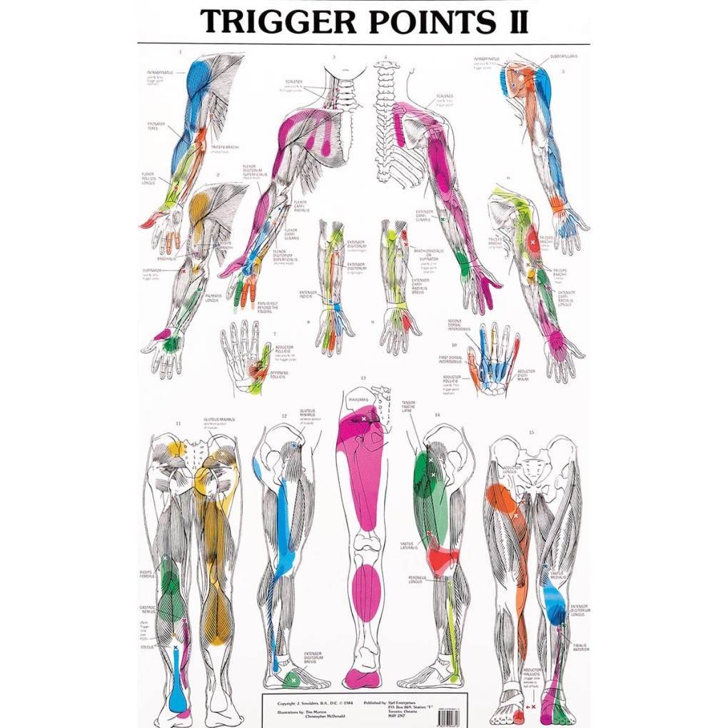 Trigger Point Chart 2